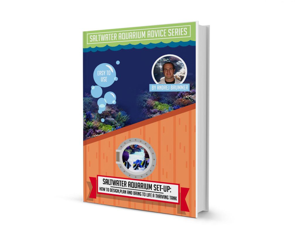 Saltwater Aquarium Set Up How to Design, Plan and Bring to Life a Thriving Tank