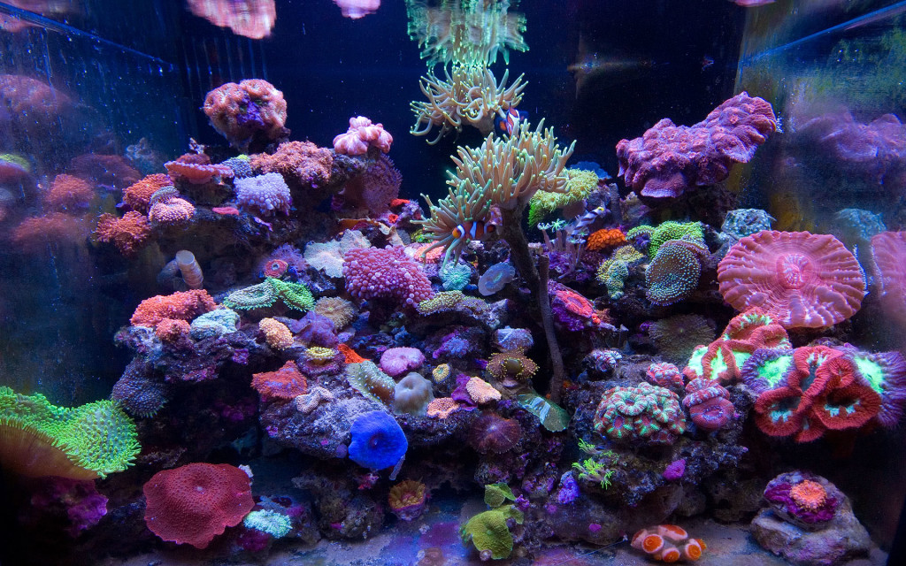 Saltwater Aquarium Set Up: A thriving reef is not a no-brainer