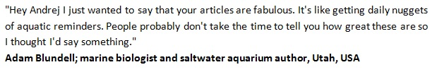 Saltwater Aquarium Set Up eBook Testimonial