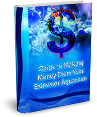 Guide to Making Money from your Saltwater Aquarium Set Up