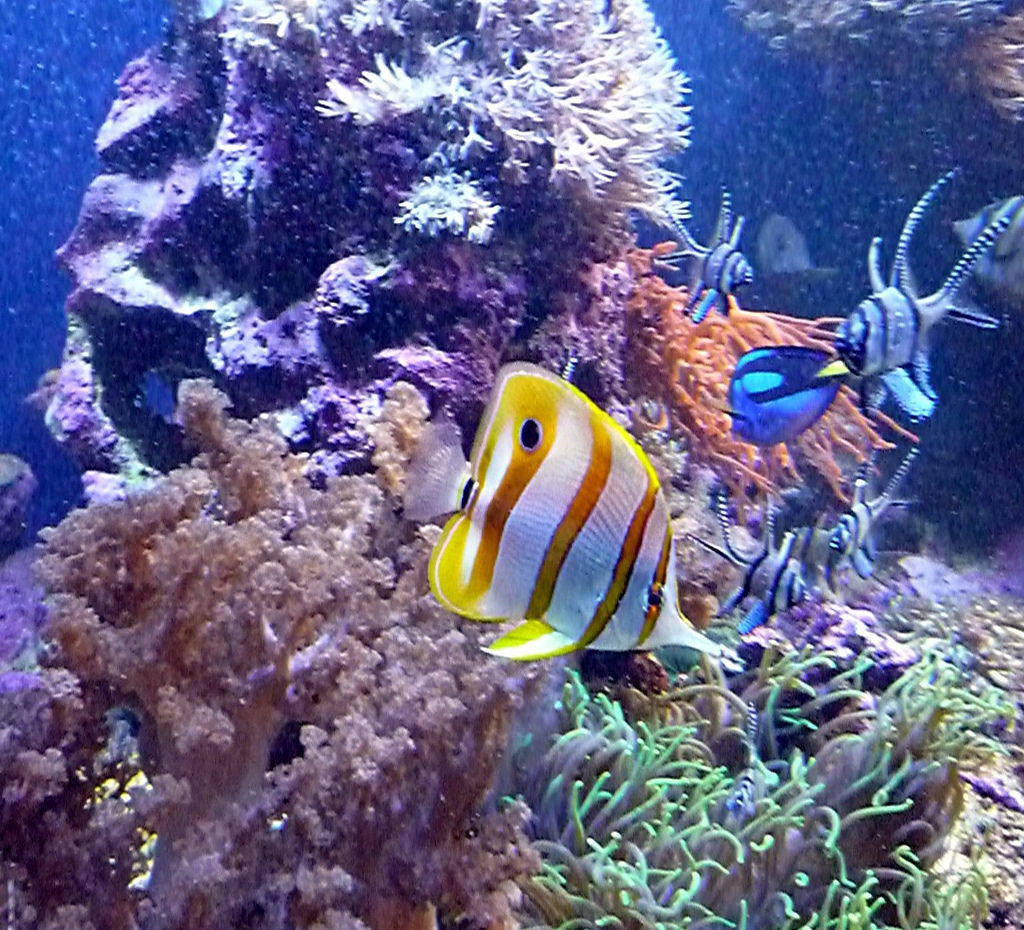 Healthy diet for marine fish