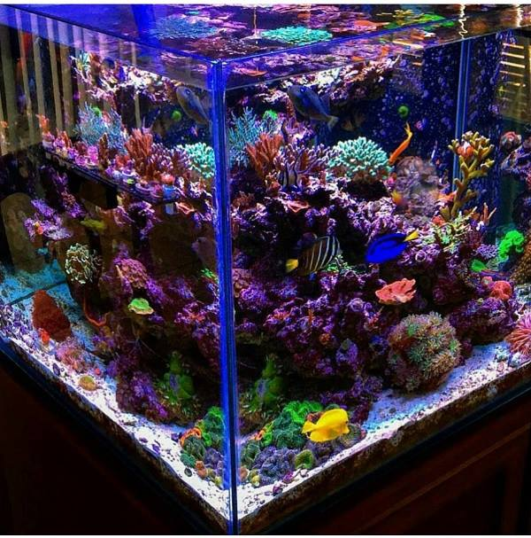 Saltwater Aquariums: Is bigger really better?