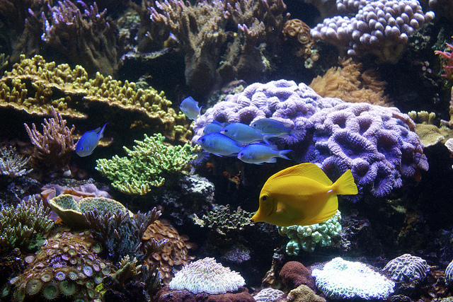 How to improve coral color