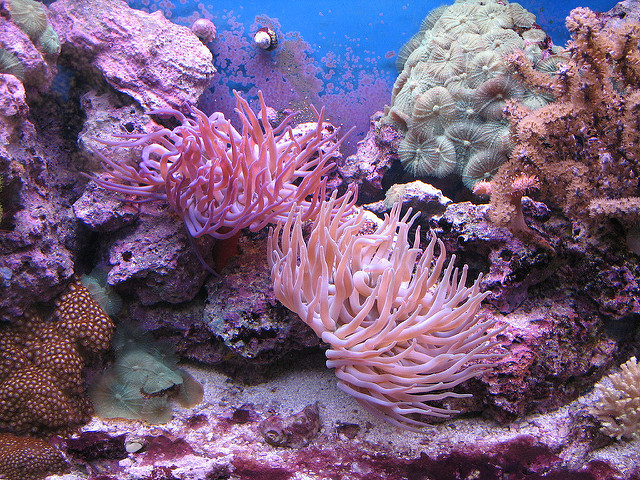 Saltwater Aquarium Myths Debunked