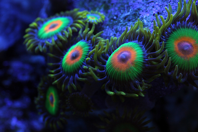 Things You DEFINITELY Need To Know About Zoas